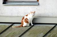 Die Katze auf dem Hausdach