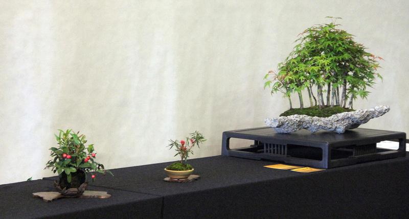 Bonsai Ausstellung Hallein